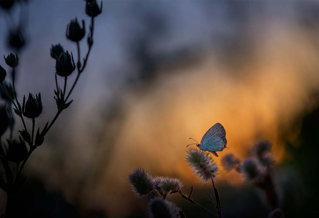 butterfly at twilight